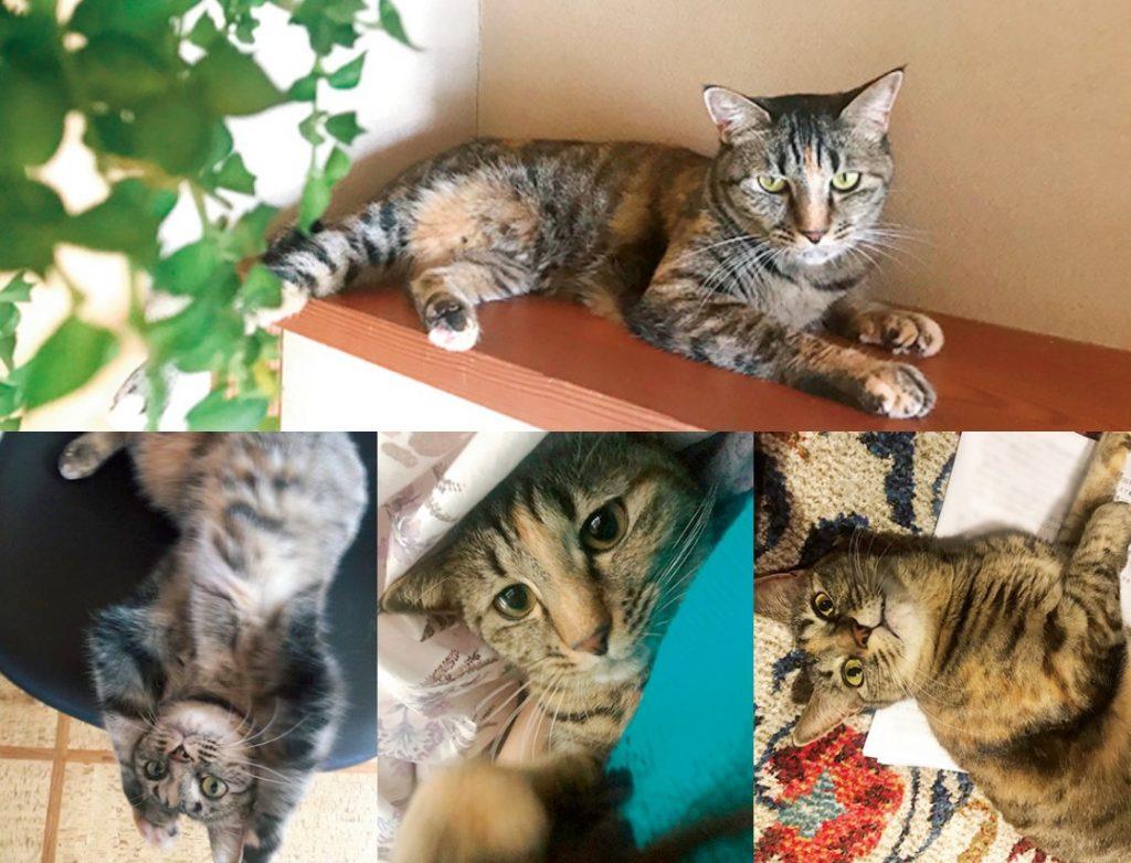 倉科カナの愛猫