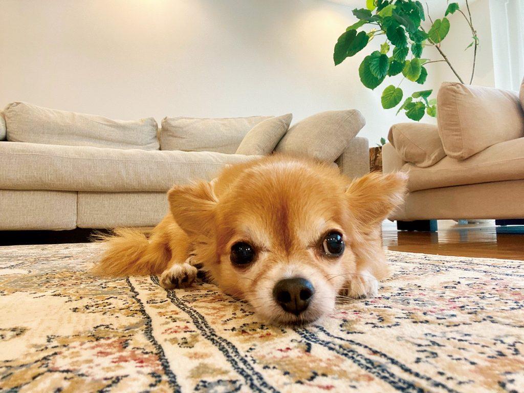 近藤千尋の愛犬