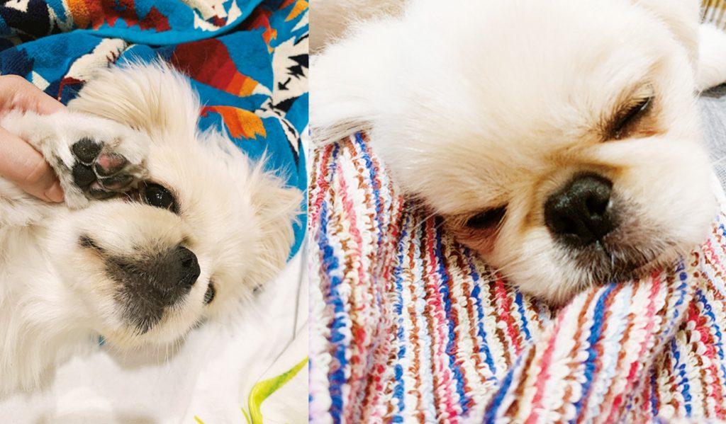 石田ニコルの愛犬