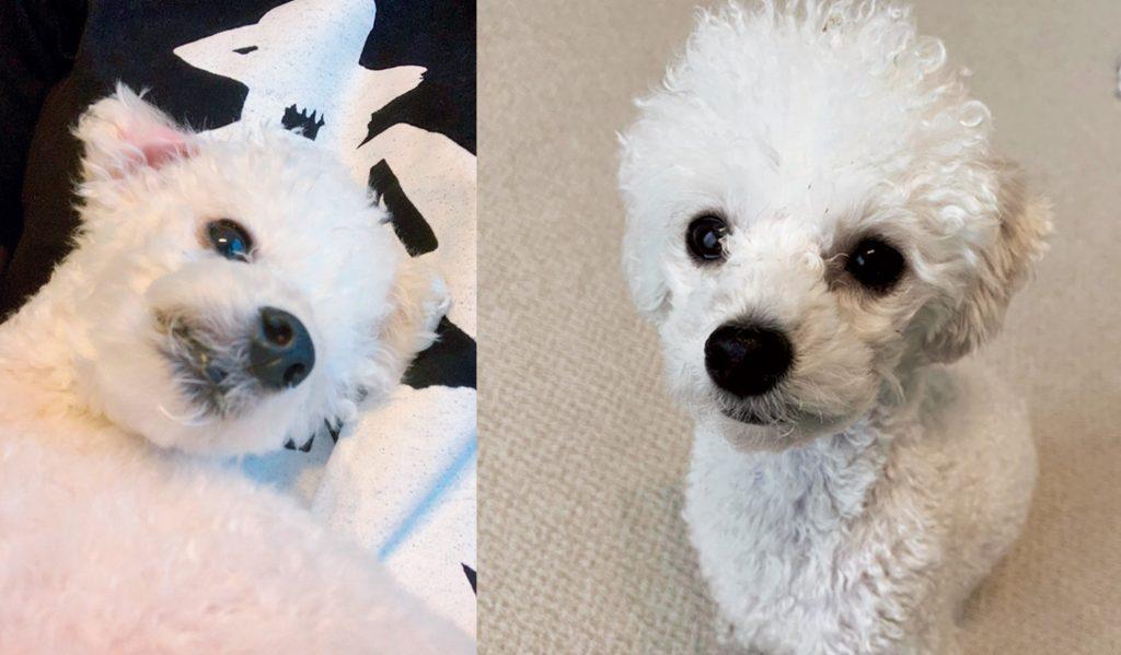 坂東希の愛犬