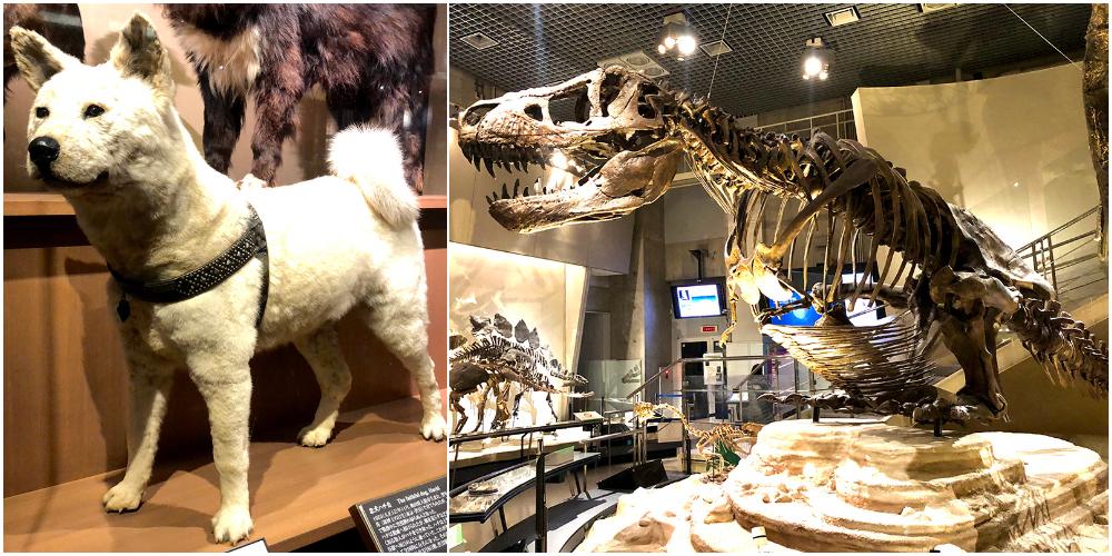 ハチ公の剥製とティラノサウルスの骨格模型