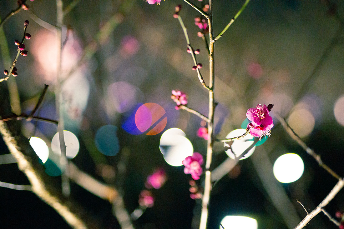 Life is Continuous Light - Plum Trees_10