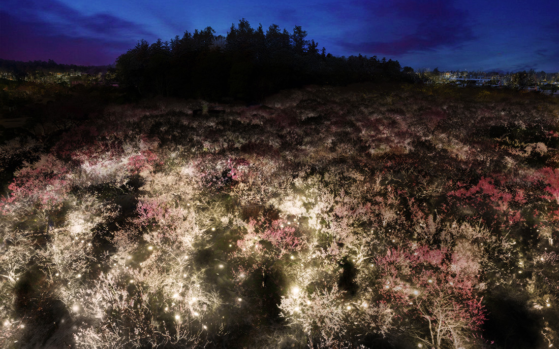Main_Life is Continuous Light - Plum Trees