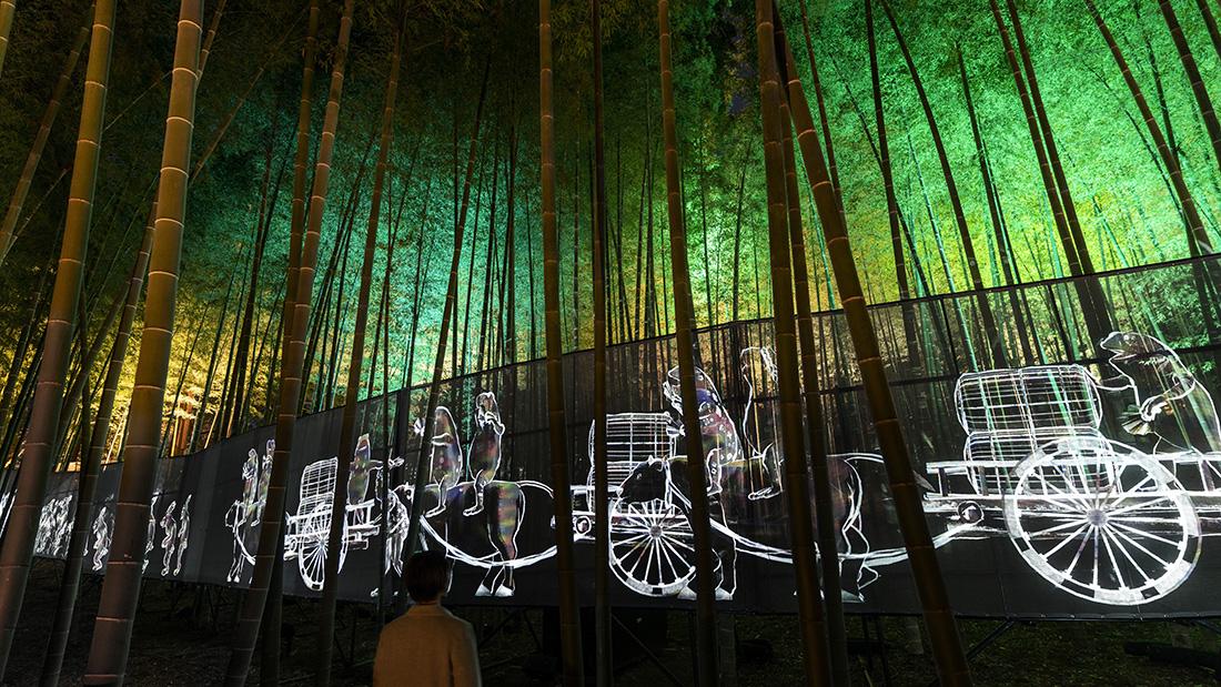 Walk, Walk, Walk - Moso Bamboo Forest
